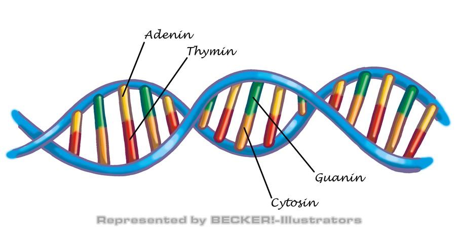 DNA von Hannes Neubauer