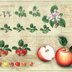 Composing Apfel von Johann Brandstetter