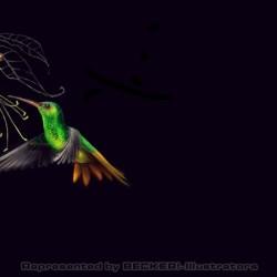 kolibri2 von Johann Brandstetter