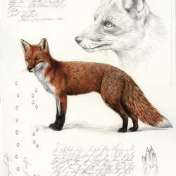 Fuchs von Johann Brandstetter