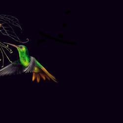 kolibri_2 von Johann Brandstetter