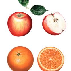 Früchte 1 von Johann Brandstetter