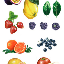 Früchte 2 von Johann Brandstetter