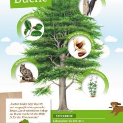 Waldbaum Postkarten_RZ.indd von Johann Brandstetter