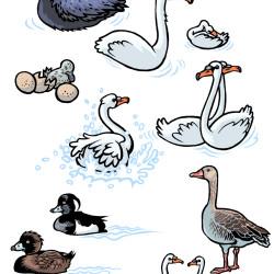 Tiere_Wasservoegel von Wittek